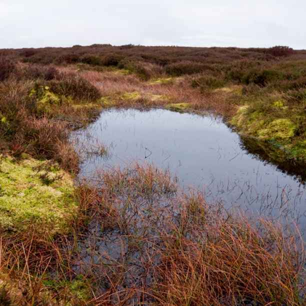 Pilot nature investment projects showing strong promise